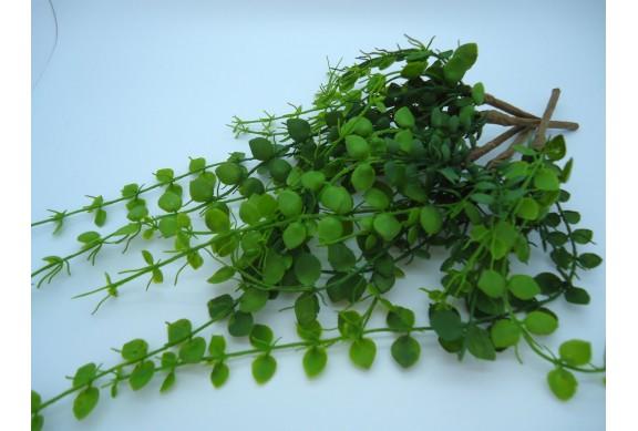 Rampicanti Verdi